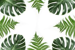 Monstera and fern foliage as border on white. Isolated with copy space. Summer frame for design. View from above. Monstera and fern foliage as border on white stock photo