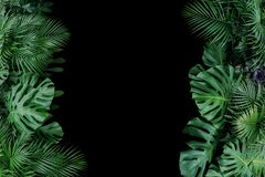 Monstera, fern, and palm leaves tropical foliage plant bush nature frame on black background. stock image