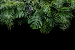 Monstera, fern, and palm leaves tropical rainforest foliage plan. T bush floral arrangement nature backdrop on black background royalty free stock photos