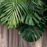 Monstera gömma i handflatan, och ormbunken lämnar tropiska lövverkväxter, blom- a royaltyfri foto