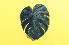 Monstera leaf with hard shadow Royalty Free Stock Photos