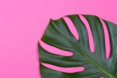 The monstera leaf Royalty Free Stock Photography