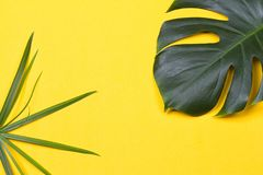 The monstera leaf. A monstera leaf on the yellow background Stock Image