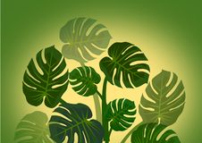 Monstera leaves background Stock Images