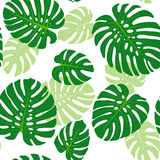 Monstera leaves background. Seamless pattern with tropical leaves of monstera Royalty Free Stock Image