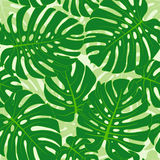 Monstera leaves background. Seamless pattern with tropical monstera leaves Stock Images