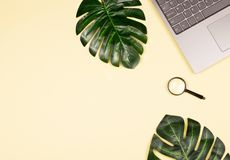 Monstera leaves, laptop and magnifying glass royalty free stock photos