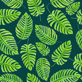 Monstera leaves pattern Stock Photos