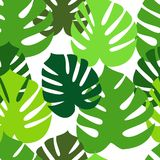 Monstera leaves seamless pattern Royalty Free Stock Images