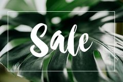 Monstera leaves template, tropical summer fashion with Sale text. With green leaf backgrounds stock photos