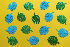 Monstera leaves on a yellow background royalty free stock images