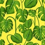 Monstera Modelo incons?til con las hojas tropicales El fondo inconsútil del vector se puede utilizar para la tarjeta, postal, car ilustración del vector