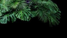 Monstera, ormbunke och för lövverkväxt för palmblad tropisk natu för buske arkivfoto