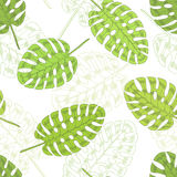 Monstera palm leaf graphic green color seamless pattern sketch illustration Stock Image