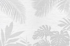 Monstera, palm and other tropical leaves foliage plant shadows o stock image