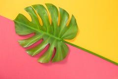 Monstera-Palmblatt auf rosa und gelbem Hintergrund Stockbilder