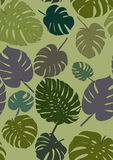 Monstera pattern Stock Photo