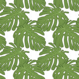 Monstera pattern Royalty Free Stock Images