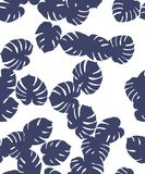 Monstera pattern Stock Photos