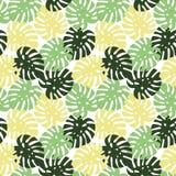Monstera riassunto tropicale ingiallisce, delle foglie verde chiaro e verde scuro Immagine Stock Libera da Diritti