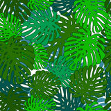 Monstera. Seamless pattern of leaves monstera various shades of green on a white background Stock Photo
