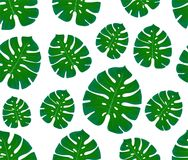 Monstera seamless pattern. Print with leaves. Design of textiles and fabrics. Trendy palm leaves. On a white. Illustration royalty free illustration