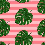 Monstera seamless tropical pattern Royalty Free Stock Images