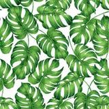 Monstera tropical de la pintura de la acuarela, hoja de palma, fondo inconsútil del modelo de la licencia verde Tropica exhausto  ilustración del vector