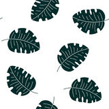 Monstera tropical leaves seamless pattern Royalty Free Stock Images