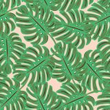 Monstera tropical  seamless pattern. Design Royalty Free Stock Photography