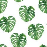 Monstera Tropisch naadloos patroon met exotische palmbladen De tropische illustratie van het wildernisgebladerte Uitheemse gewass vector illustratie