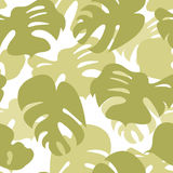 Monstera vealev pattern Royalty Free Stock Photos