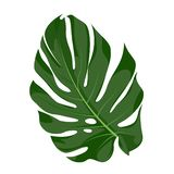 Monstera vectorillustratie royalty-vrije illustratie