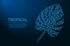Monsterablad door punten en lijnen, veelhoekig wireframenetwerk op nachthemel wordt gemaakt met ster, tropische palmbladen dat Ve vector illustratie