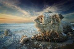 Monstre congelé sur la côte Images libres de droits
