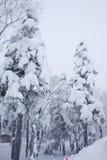Monstre de neige sur la forêt Photos libres de droits
