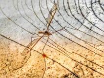 Monstre de vampire de moustique de poste de nuit photographie stock libre de droits