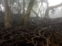 Monstrous roots. Roots on the ground level pretending as royalty free stock image