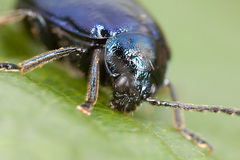 Monstruo del escarabajo Imagenes de archivo