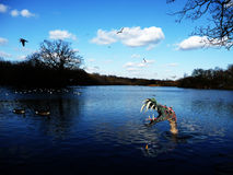 Monstruo en el agua Foto de archivo libre de regalías