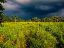 Monsunstorm i Chitwan, Nepal royaltyfri foto