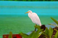 MONSUNU ptak Zdjęcia Royalty Free