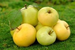 Montão das maçãs em grass_2 verde Imagens de Stock Royalty Free
