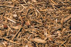 Montão das microplaquetas de madeira fotografia de stock royalty free