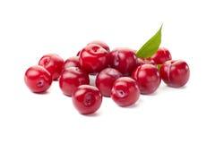 Montão de ameixas vermelhas maduras no branco Imagens de Stock Royalty Free