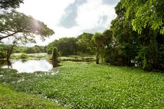 Montão de Chilaw, Sri Lanka Fotos de Stock Royalty Free