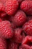 Montão de framboesas vermelhas vibrantes maduras frescas Fotografia macro Textura visível do tiro aéreo da vista superior Fundo n Foto de Stock Royalty Free