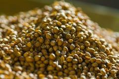 Montão de sementes de coentro Imagens de Stock