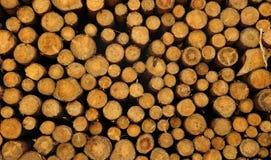 Montão de troncos de árvore abatidos Foto de Stock