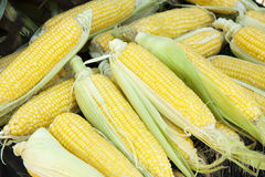 Montão do milho Fotografia de Stock Royalty Free